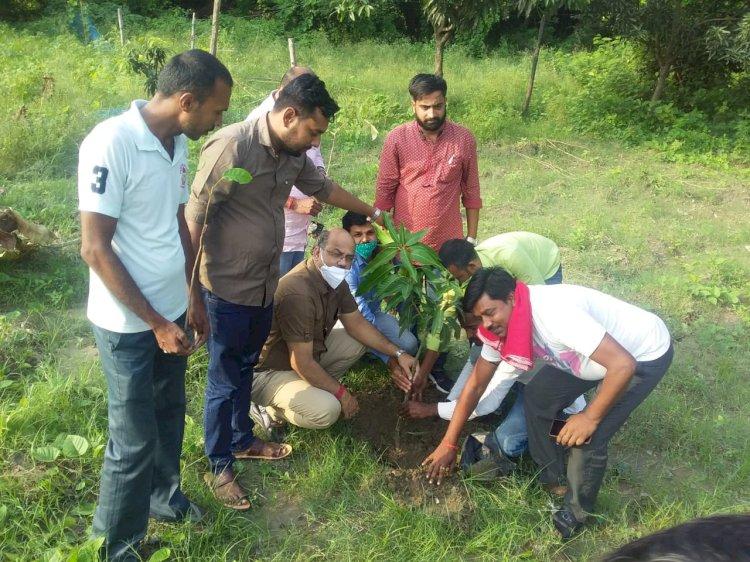 अथमलगोला मंडल भाजपा द्वारा वृक्षारोपण कार्यक्रम आयोजित